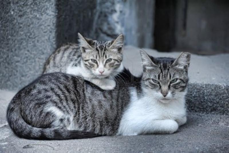 Vestiti da battesimo per bimbo mangiare per gatti for Miglior cibo per gatti