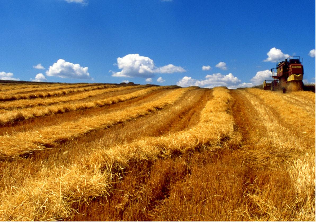 Biomasse vantaggio per il sud