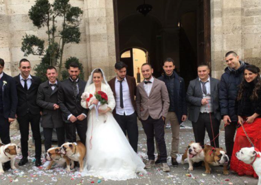 Matrimonio con bulldog
