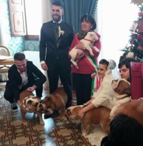 I bulldog nella sala del Comune a Sassari